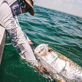 Grabbing Tarpon Face By Captain Panama City Florida